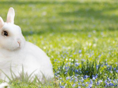 Frühlingsangebot